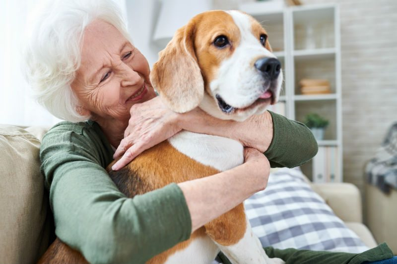 Maintaining Senior Independence - Playing with Pets